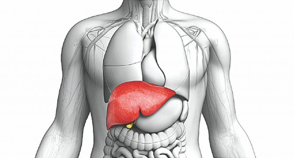 Two-Enzymes-Regulate-Liver-Injury-In-NASH