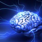 Scientists Find Mathematical Regulations Stimulating Brain Development