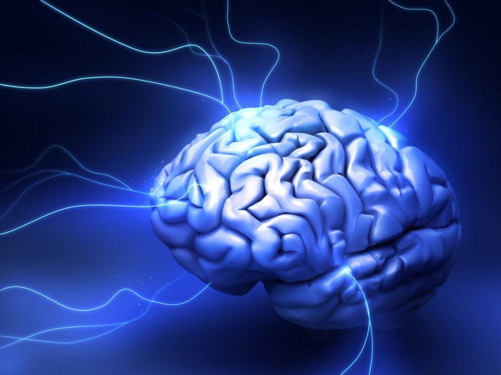 Scientists-Find-Mathematical-Regulations-Stimulating-Brain-Development